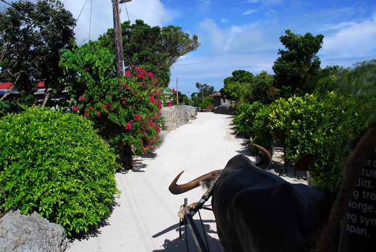 珊瑚の道を行く-(竹富島)