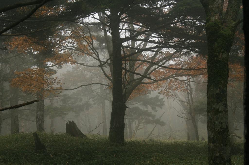 IMG_2787「大台ケ原」