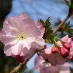 OLYMPUS E-510で撮影した植物(P4051851)の写真(画像)
