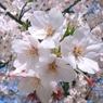 SONY DSC-T9で撮影した植物(T9 スーパーマクロ)の写真(画像)