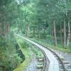 屋久島トロッコ道