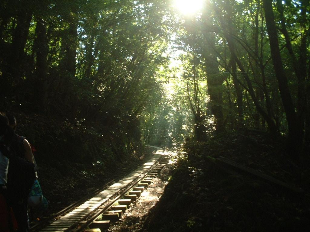 トロッコ道に光