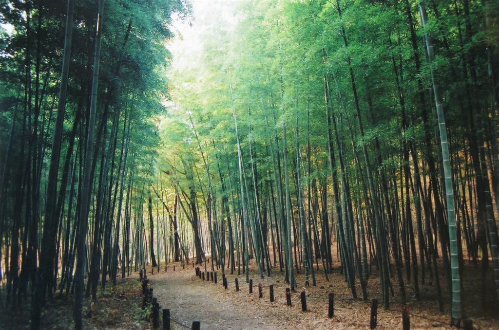 竹 2005