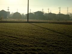 朝の光 2008