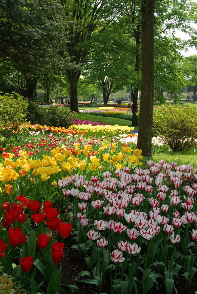 P0347昭和記念公園の渓流広場