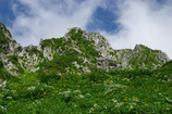 P2046雲上のお花畑