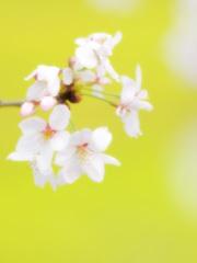 春ですね・・