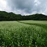 PENTAX PENTAX K20Dで撮影した風景(aww3)の写真(画像)