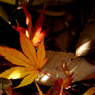 PENTAX PENTAX K20Dで撮影した風景(mlq9)の写真(画像)