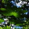 PENTAX PENTAX K20Dで撮影した風景(aaa3)の写真(画像)