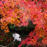 PENTAX PENTAX K20Dで撮影した風景(mg30)の写真(画像)