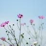 PENTAX PENTAX K20Dで撮影した植物(aqw2)の写真(画像)