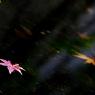 PENTAX PENTAX K20Dで撮影した風景(d5)の写真(画像)