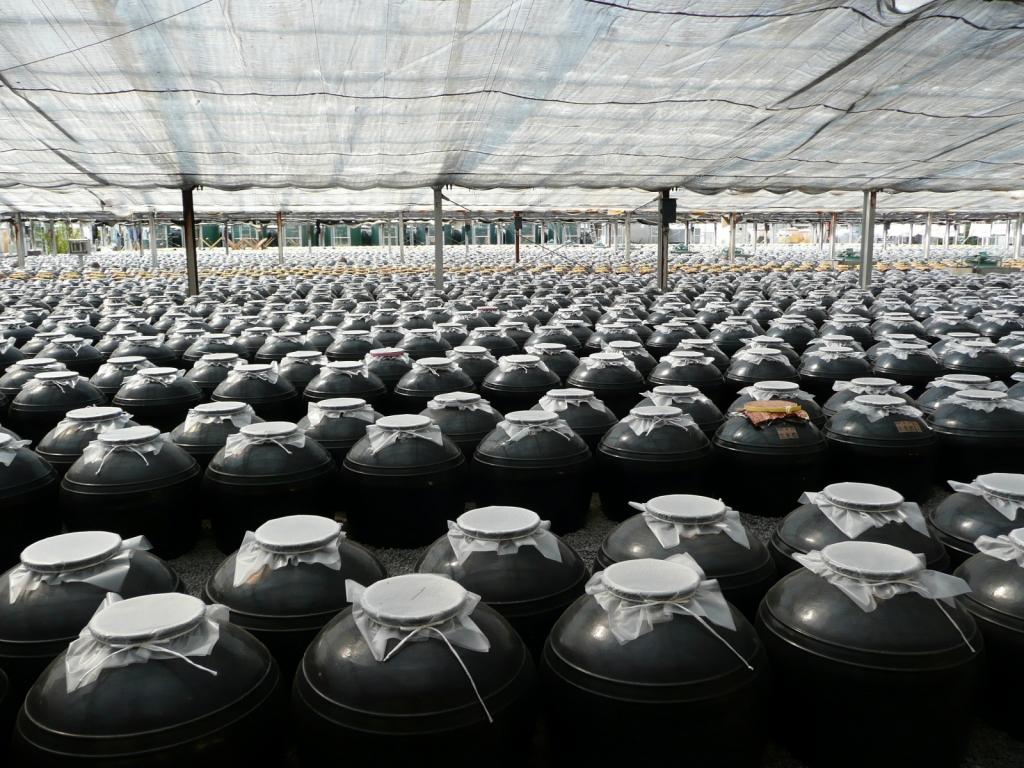 薩摩・黒酢工場