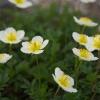 立山の植物 2