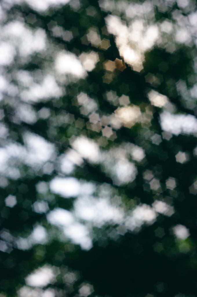木漏れ日を星に・・・