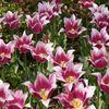 花の都公園 チューリップ祭りにて