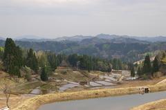 松之山の遅い春2