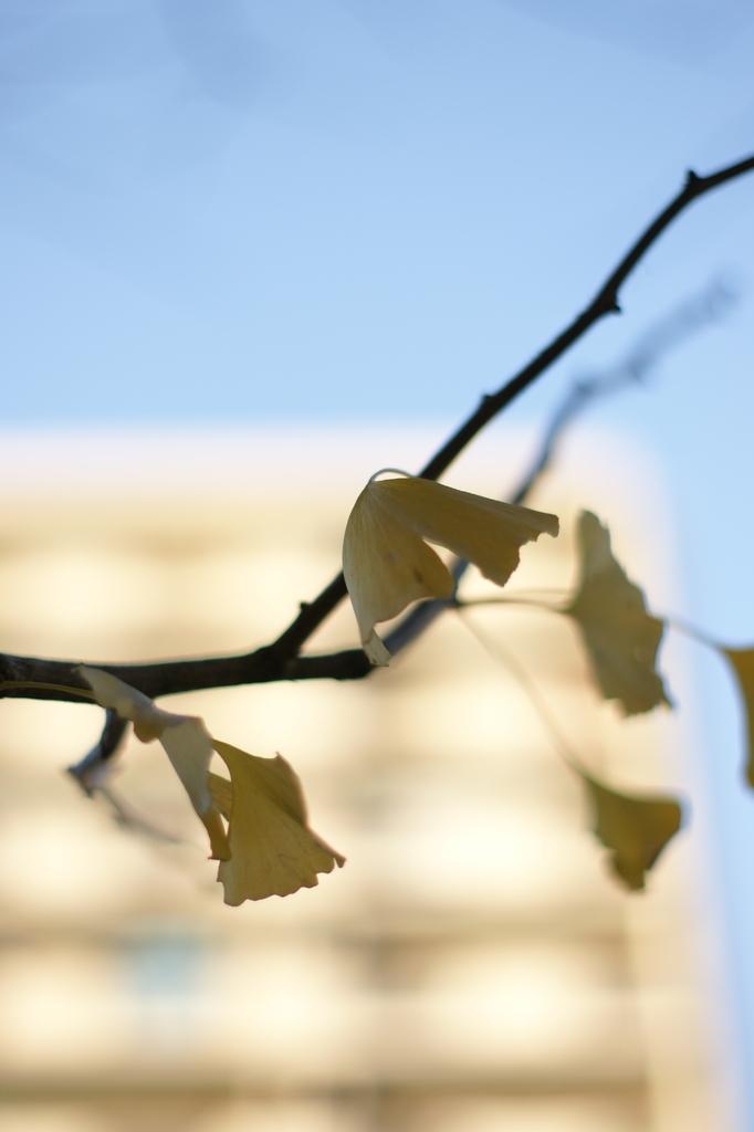 去りゆく秋