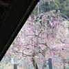 梅祭り00001