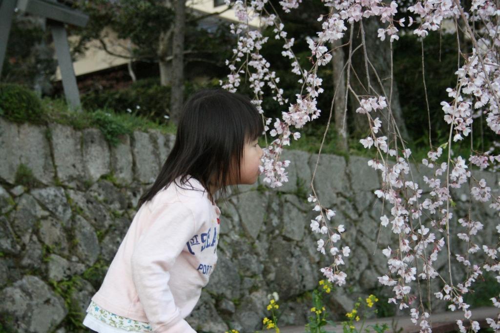 桜と子供と