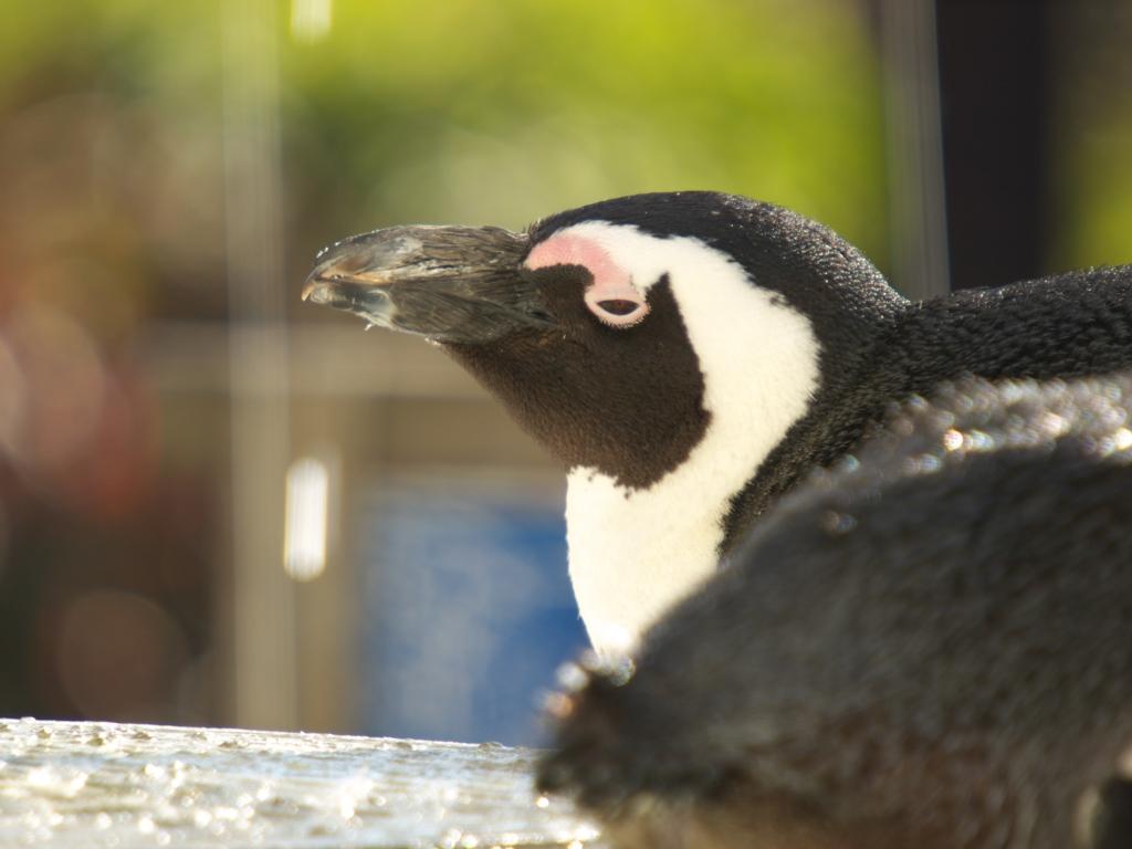 ペンギンもZzz...