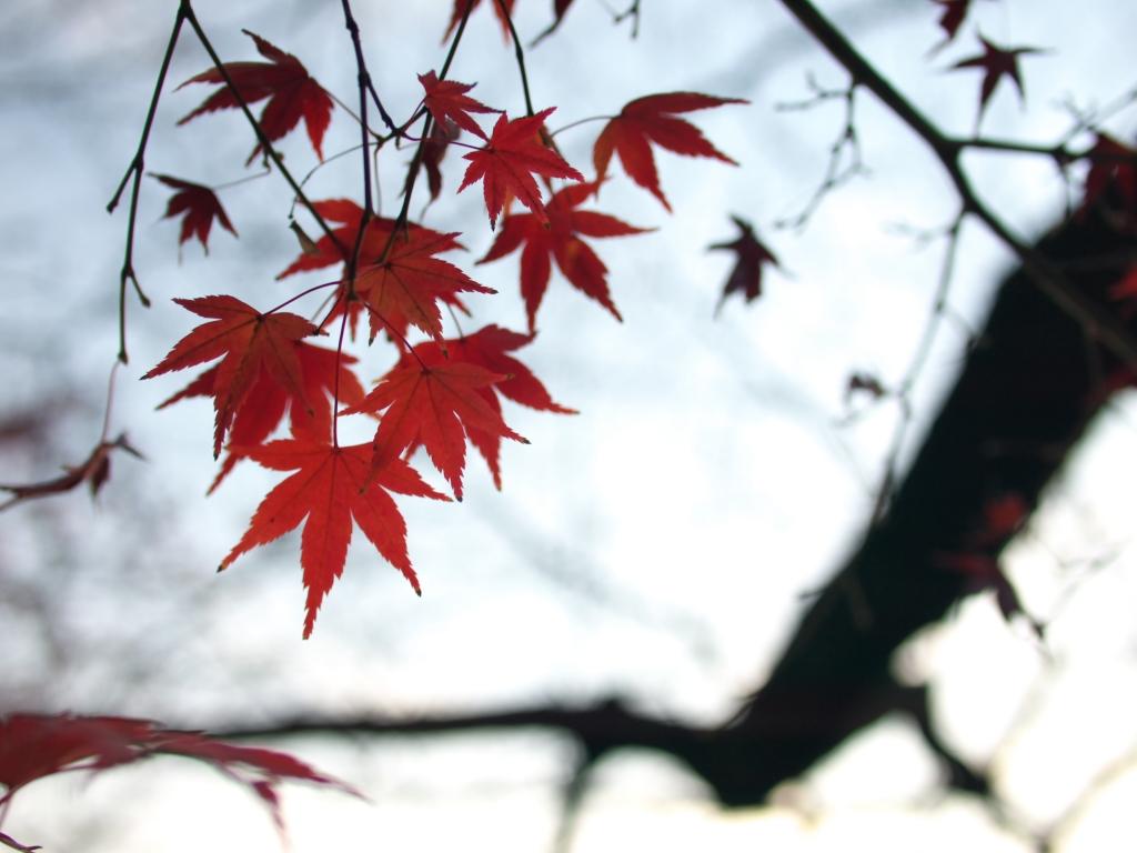 もう紅葉も終わり