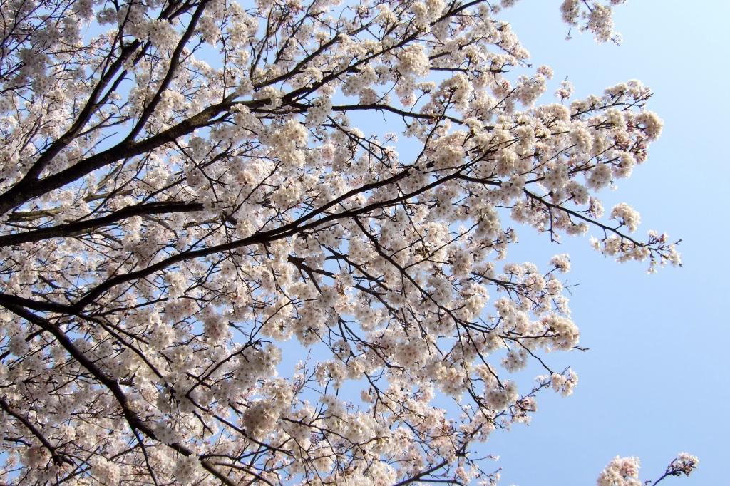 2008春