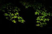紅葉の光1