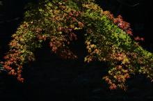 紅葉の光2