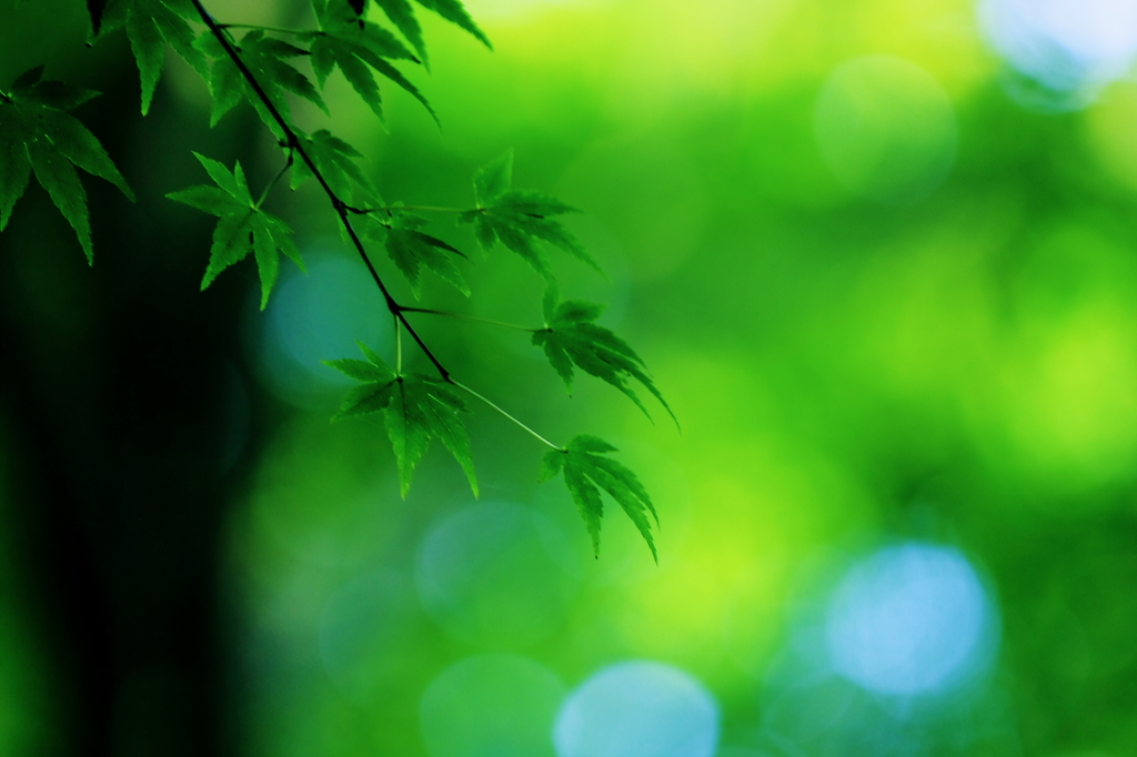 GreenGreenⅡ