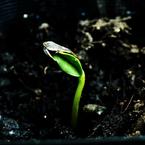 CANON Canon EOS 40Dで撮影した植物(ひらかないよ~ )の写真(画像)