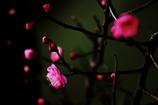 春みっけ!