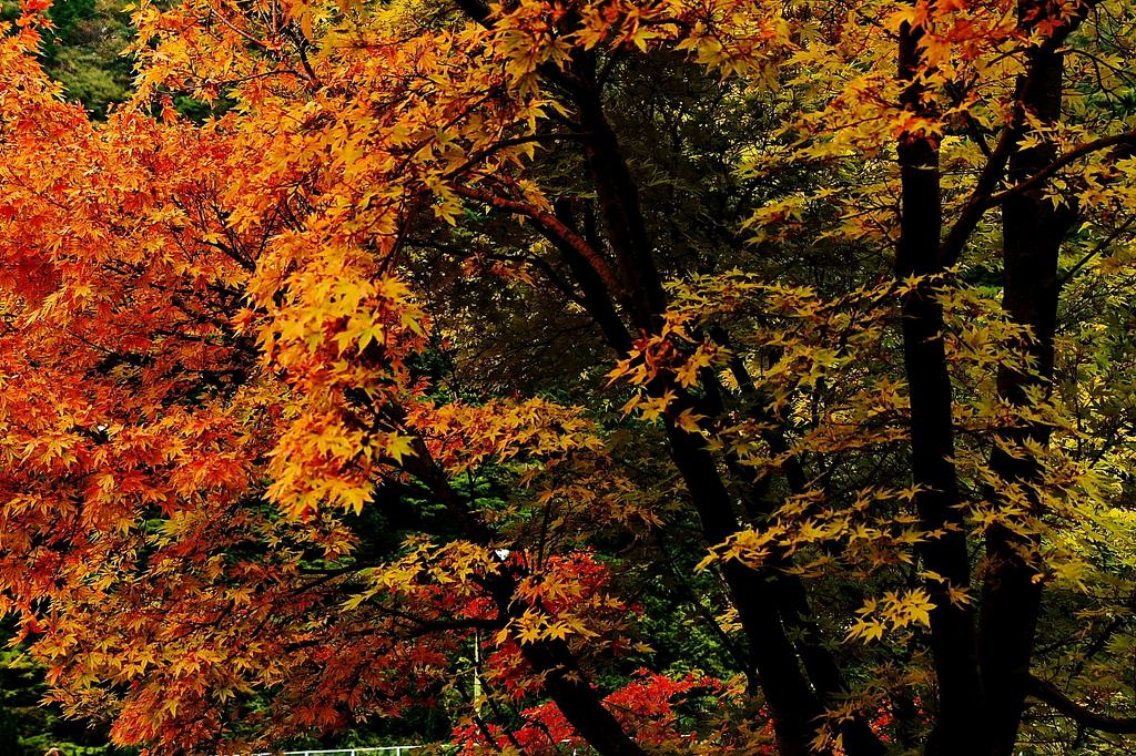秋、見っけ!