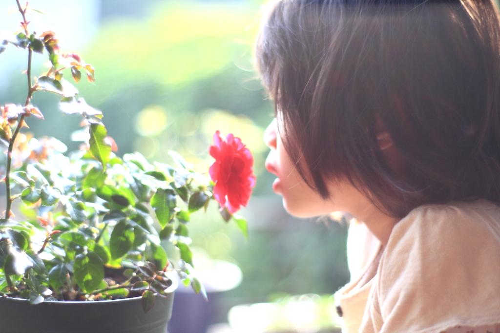 花の香りにさそわれて