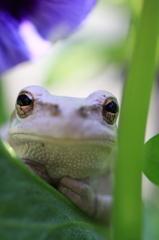 家政蛙は、見た!