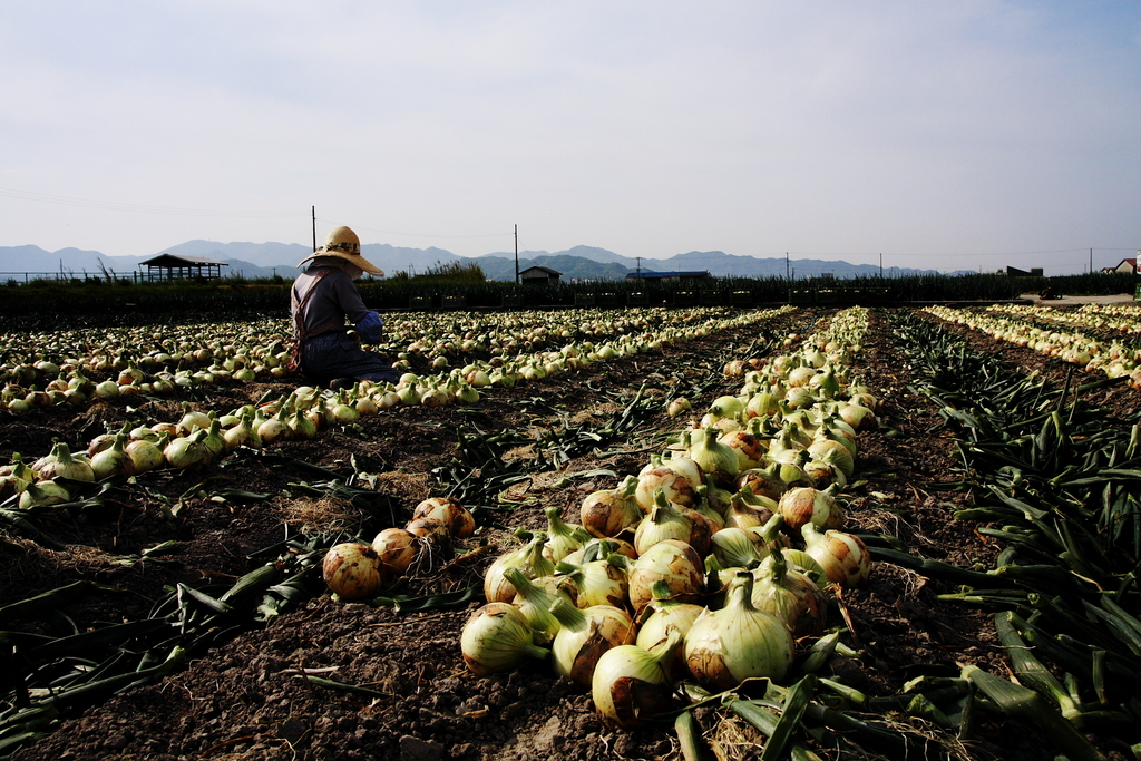 大地の恵み収穫