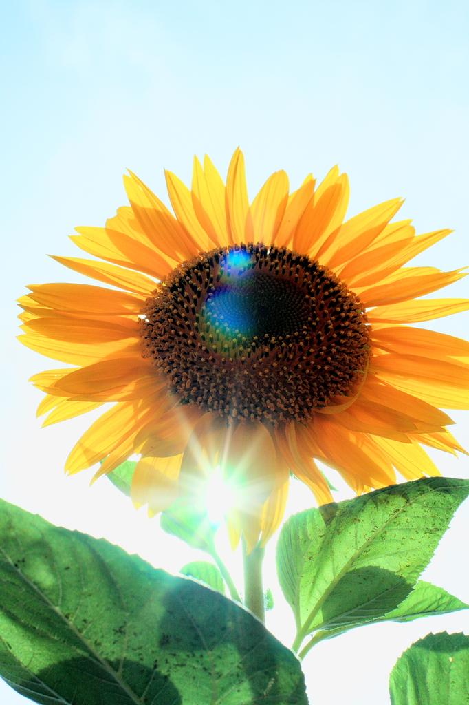 太陽とSUN