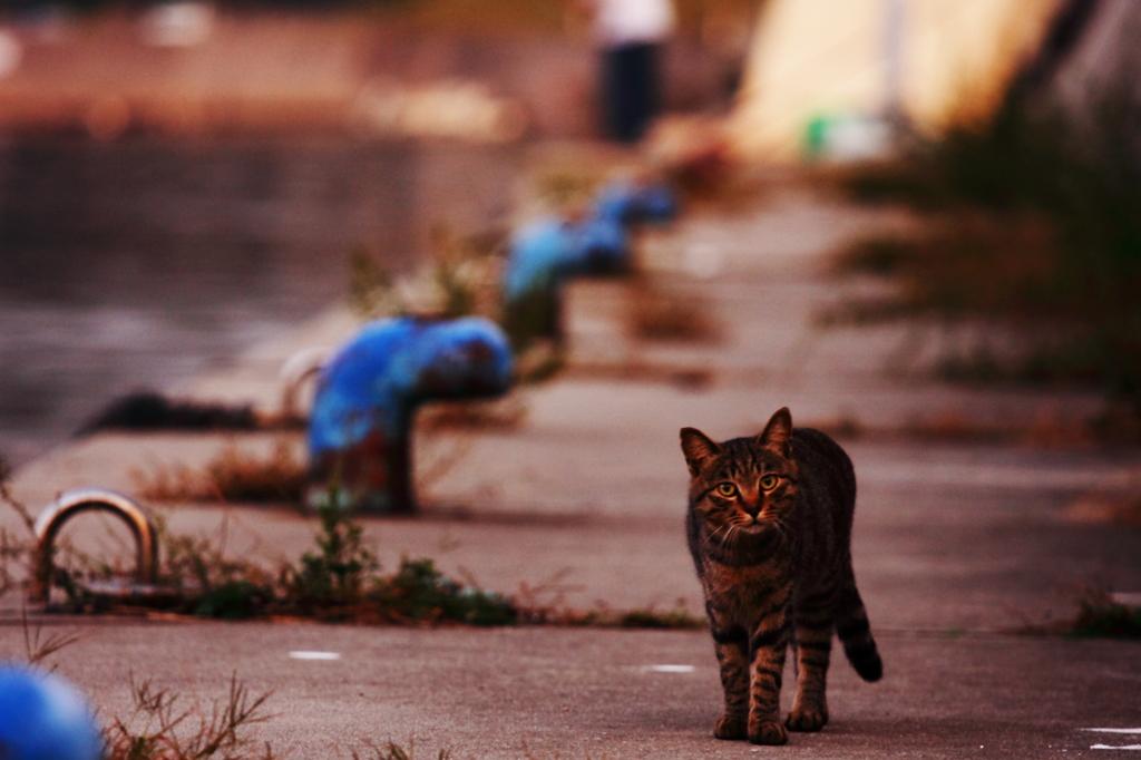 漁港に住む猫