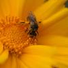 花粉にまみれて