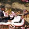 桜と汽車ポッポ