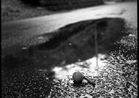 HASSELBLAD 500C/Mで撮影した風景(びわ)の写真(画像)