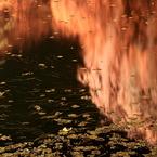 CANON Canon EOS 5D Mark IIで撮影した風景(花蛍)の写真(画像)