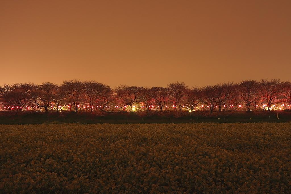夜桜回廊-Ⅰ