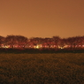 CANON Canon EOS 40Dで撮影した風景(夜桜回廊-Ⅰ)の写真(画像)