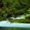 神秘の渓流