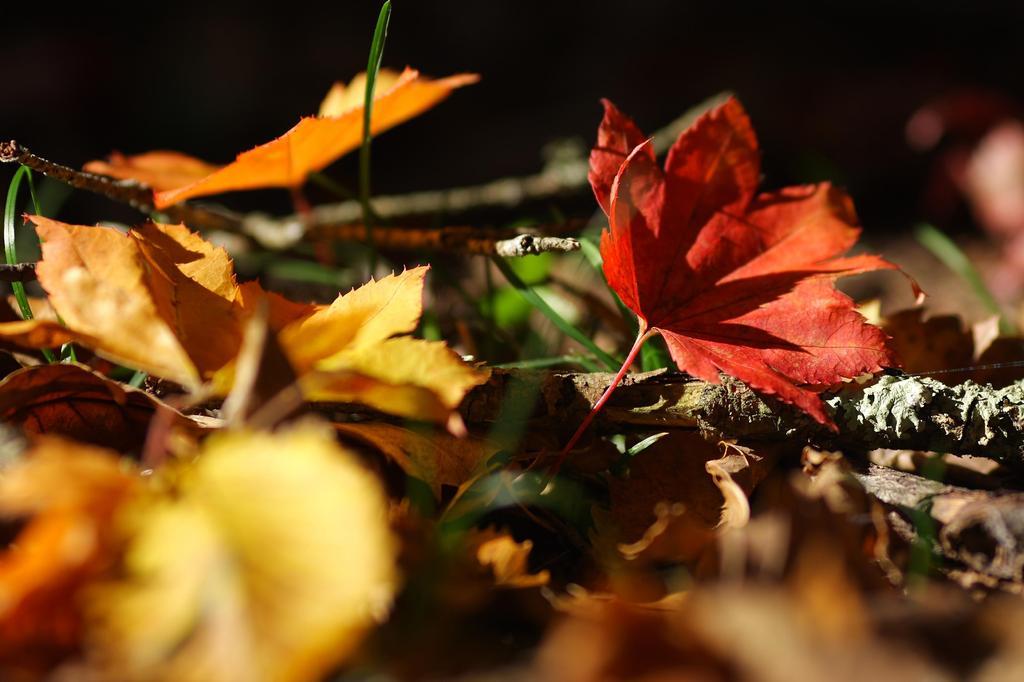 34 落ち葉の賑わい