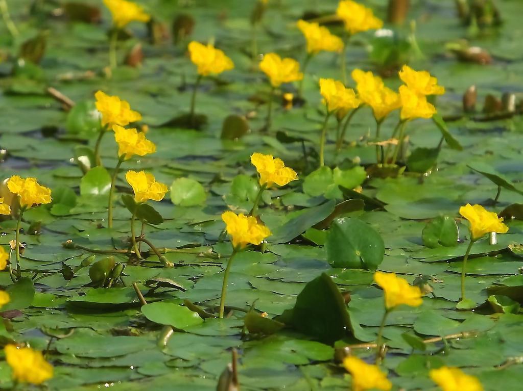 メルヘンの池 Ⅱ