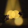 CANON Canon EOS 40Dで撮影した植物(語らい)の写真(画像)