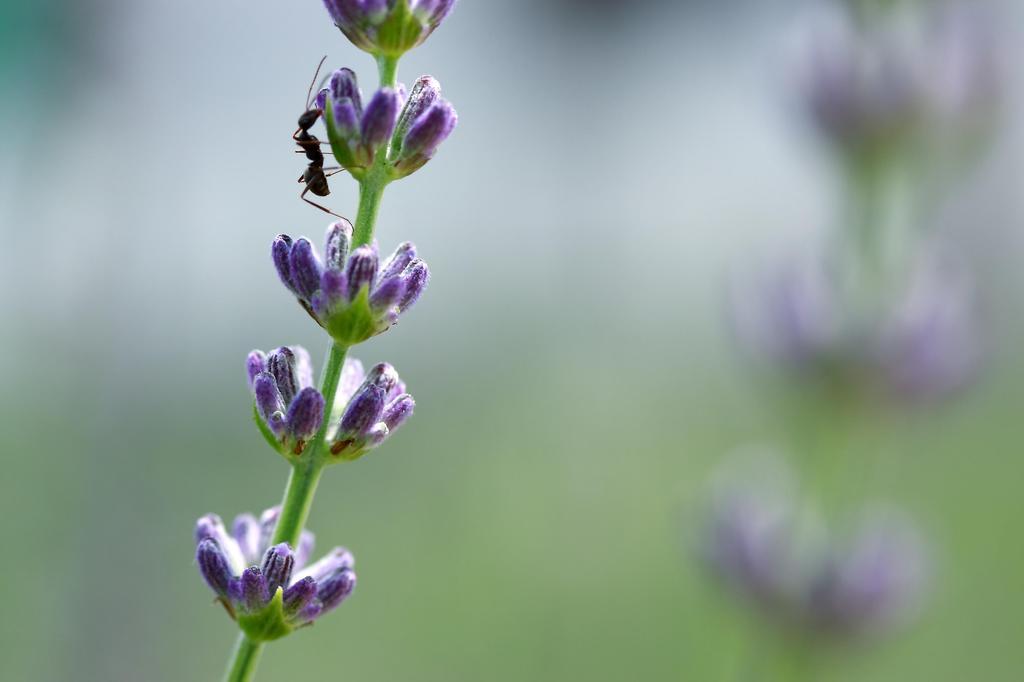 アリの探し物